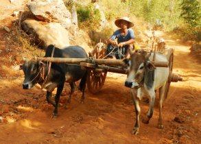 Birmanie0573