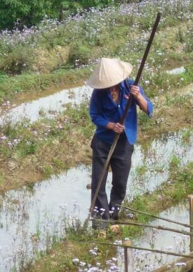 Vietnam0657