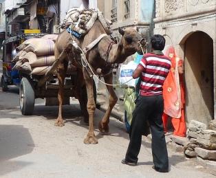 Rajasthan333